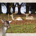 """Deer Winter"" by coljay"