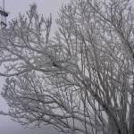 """Snow Kissed"" by Kennie"