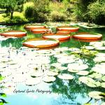 """Dancing on a lily pad"" by MaritzaBaird"
