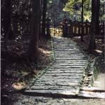"""""""Nara, Japan"""" by masner"""