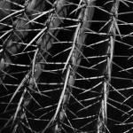 """""""cactus"""" by eastman"""