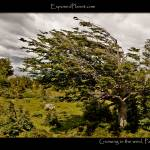 """Patagonia: tree growing in the wind"" by ExposedPlanet"