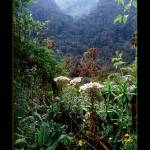 """Rwenzori forest in Uganda"" by ExposedPlanet"