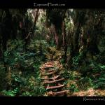 """""""Forest trail in Rwenzori mountains, Uganda"""" by ExposedPlanet"""