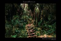 Forest trail in Rwenzori mountains, Uganda