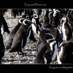 """Magellan Penguins on Magdalena Island, Chile"" by ExposedPlanet"