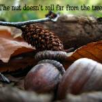 """The Nut Doesn"