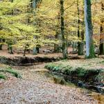 """""""Amberwood Inclosure, New Forest"""" by DecentExposures"""