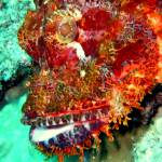"""Face of Scorpionfish"" by takau99"