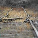 """Abandoned Rail, end of the line..."" by pgnas"