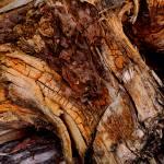 """""""Bog Oak"""" by kenart"""