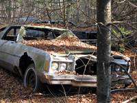 Vehicle Abandoned in the Woods