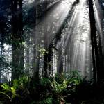 """Redwoods"" by maribethjoy"