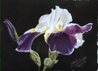 Arlene's Purple Iris