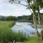 """Killarney lakeside scene"" by jmci"