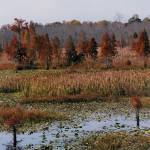 """Fall Lake"" by RebeccaStiles"