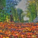 """Leafy Path"" by jonathangill"