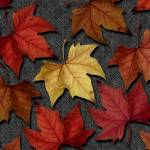 """Autumn Leaves I"" by dpw-shane"