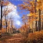 """""""C Wolter Wilderness"""" by RichardBaumer"""