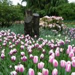 """""""tulips"""" by JesusEatsRamen"""