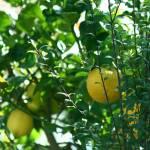 """""""Lemons"""" by sumfellanameryan"""