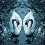 """""""Swan III"""" by dpw-shane"""