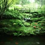 """Koi Garden"" by CCordelia"