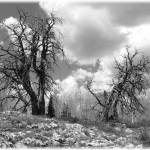 """Deadwood"" by ericksonsr"