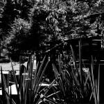 """pagoda garden"" by elizabethdoherty"