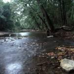 """Darby Creek"" by RichardBaumer"