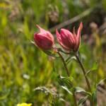 """""""pink flowers"""" by jedixi"""