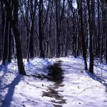 """Davey Woods Snowy Path"" by RichardBaumer"
