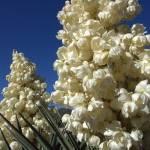 """""""White Flowers"""" by digital_illuminati"""