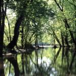 """Darby Creek Preserve"" by RichardBaumer"