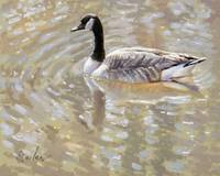 Spring Thaw Canada Goose