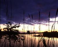 erie marsh twilight rescanned