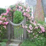 """Rose Gate"" by paulbay"
