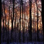 """Sharon Hollow Pre-dawn"" by RichardBaumer"