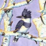 """Belted Kingfisher/Birch Perch"" by bohanart"