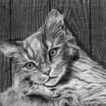"""Barn Kitty"" by jyvonne"