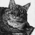 """Perky Kitty"" by jyvonne"