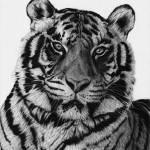 """Tiger"" by jyvonne"
