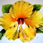 """yellow hibiscus"" by Cas"