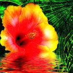 """Thirsty Hibiscus Flower"" by elayne"