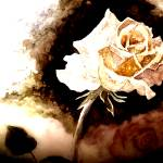 """Golden Rose"" by elayne"