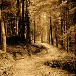 """forest path"" by toph"