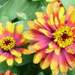 """pretty flowers"" by LoraxLady"