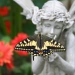 """""""Butterfly - It"""