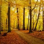 """""""Herbstwald"""" by True_Bavarian"""