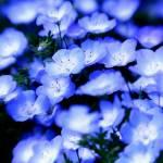 """""""blue light"""" by setsuna"""